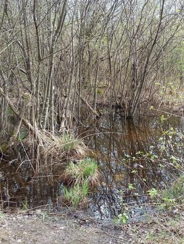 Marais - bois et eau.jpg
