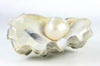Perle.jpg