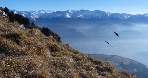 Belledonne et oiseaux.JPG