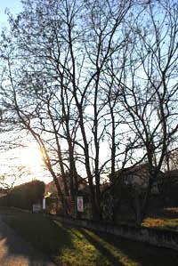 Avenue Joliot Curie juste après les 2 sapins, sur le bord de la D1090